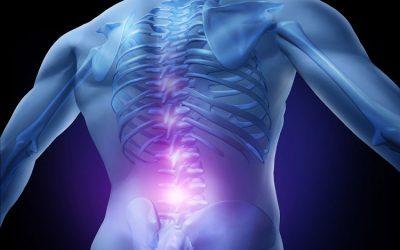Rückenschmerzen – Ursachen beheben – Functional Training Magazin
